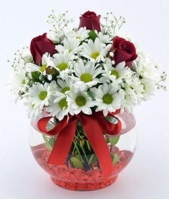 Fanusta 3 Gül ve Papatya  Kahramanmaraş çiçek mağazası , çiçekçi adresleri