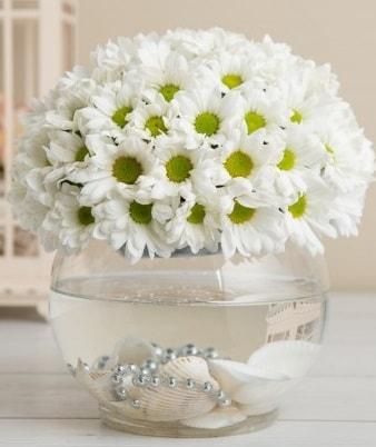 Fanusta beyaz Papatya  Kahramanmaraş uluslararası çiçek gönderme