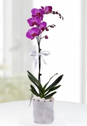 Tek dallı saksıda mor orkide çiçeği  Kahramanmaraş kaliteli taze ve ucuz çiçekler