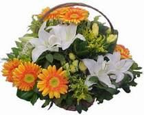 Kahramanmaraş internetten çiçek satışı  sepet modeli Gerbera kazablanka sepet